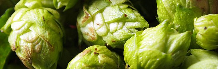 Growing Hops in Michigan and the Great Lakes Region website