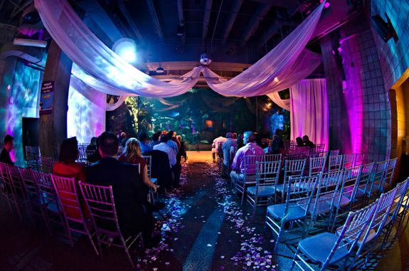 Florida Beach Wedding With Aquarium Reception: The Florida Aquarium: Our Wedding Ceremony Will Be Held