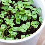 Starting an Herb Garden - how to grow herbs in pots at home