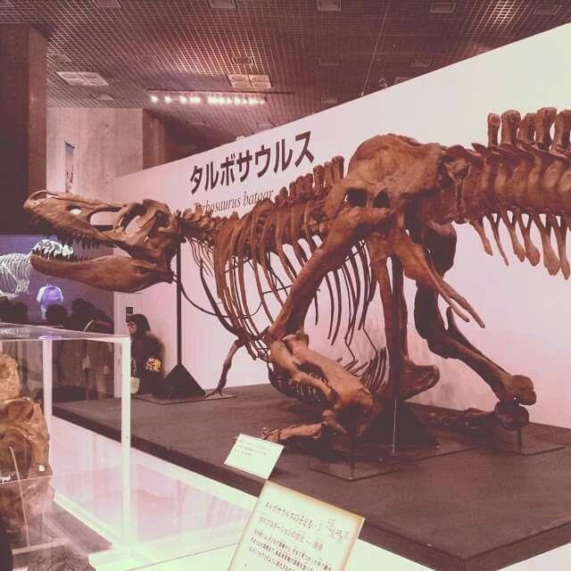 Dinosaur size: Wikis