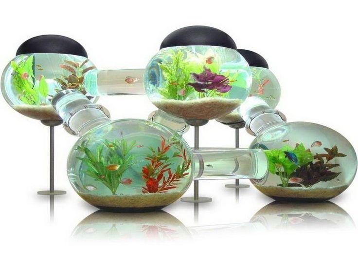 9 best aquarium images on Pinterest   Aquariums, Aquarium led ...