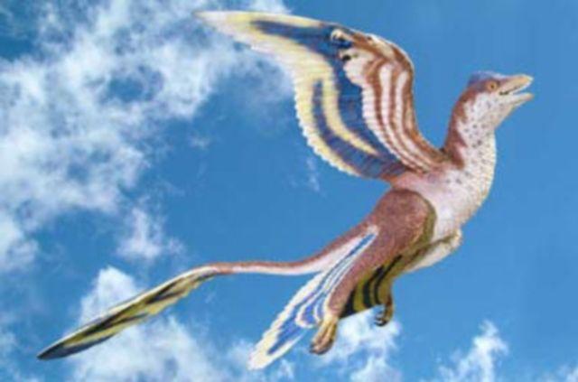 Meet Microraptor, the World's Smallest Dinosaur: Microraptor Was the Same Dinosaur as Cryptovolans