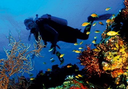 Best Dive sites in Vietnam: Nha Trang, Whale Island and Phu Quoc. The tourist season is similar to Thailand's. The good weather and clear waters start mid November and last until early June. Then the rainy season usually starts and diving conditions are not so good. This however compliments diving in Nhatrang & Whale Island where the rainy season can begin mid November till early January.