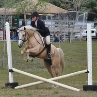 6 Year Old Palomino POA All Around Gelding for sale in Hillsborough, Florida :: HorseClicks