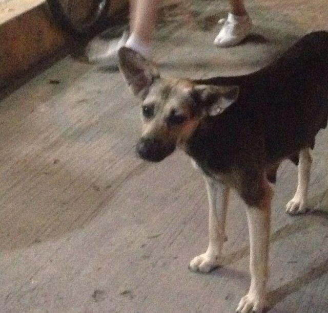 """En Veracruz, me tope en la calle con una tocaya, """"Paloma"""", muy bonita :) aunque un poco orejona eso si jeje"""