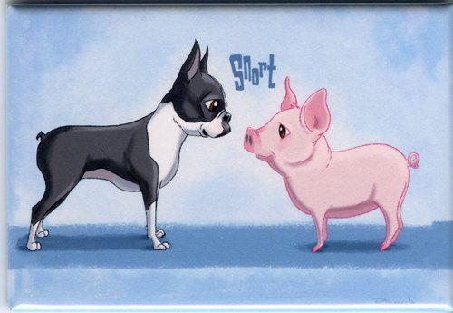 Boston Terrier art magnet boston terrier and pig by rubenacker