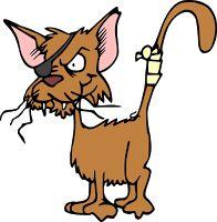 How to make homemade dry shampoo for cats, diy cat shampoo