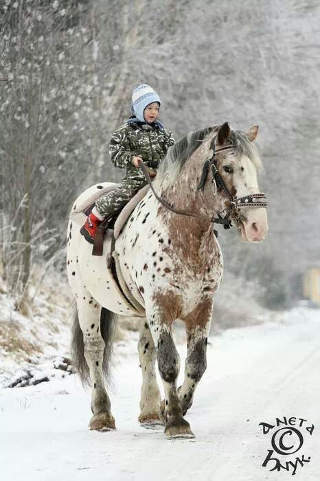 .Little kid on such a big draft horse, so gentle.