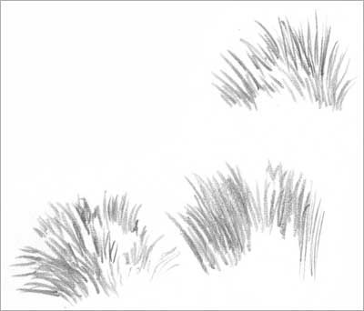 DRAWING GRASS and WEEDS tutorial by Diane Wright