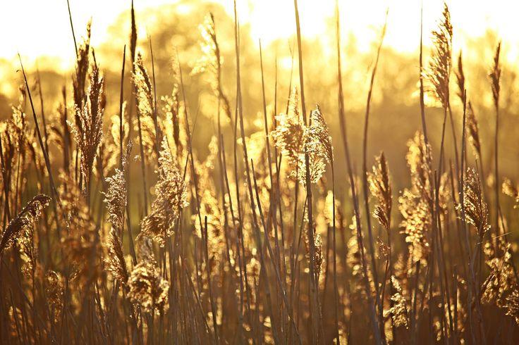 Op weg. 'Gelukkig wie bij U hun toevlucht zoeken, met in hun hart de wegen naar U. Trekken zij door een dal van dorheid, het verandert voor hen in een oase; rijke zegen daalt als regen neer. Steeds krachtiger gaan zij voort om in Sion voor God te verschijnen.' Psalm 84:6-8