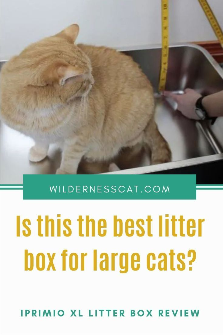 Iprimio Litter Box Review Is This The Best Large Litter Box For Cats With Images Litter Box Best Cat Litter Litter