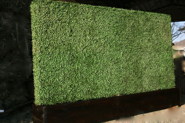 Artificial hedge wall can add depth and texture to any indoor space. Bringing outdoor concepts indoors sets a pace that opens visitors up to other design concepts within the space - allowing more playful and creative design possibilities.