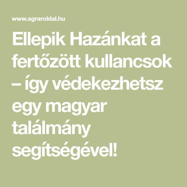 Ellepik Hazánkat a fertőzött kullancsok – így védekezhetsz egy magyar találmány segítségével!