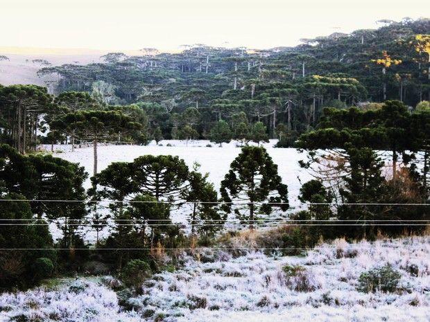 Com geada, paisagem em São Joaquim ficou branca  (Foto: Mycchel Hudsonn Legnaghi/Agência São Joaquim Online)