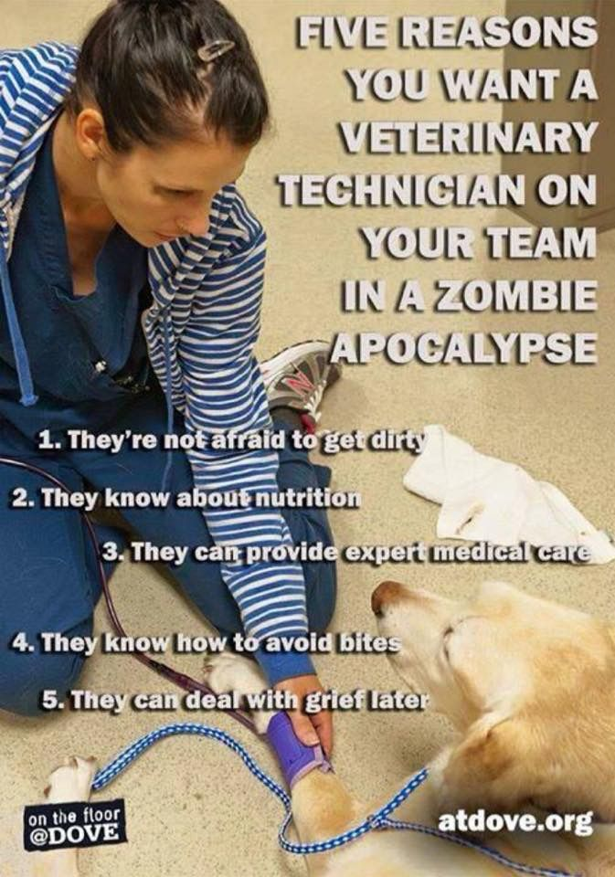 Pin by Liny on FUNNY work sayings | Vet tech quotes, Vet ...