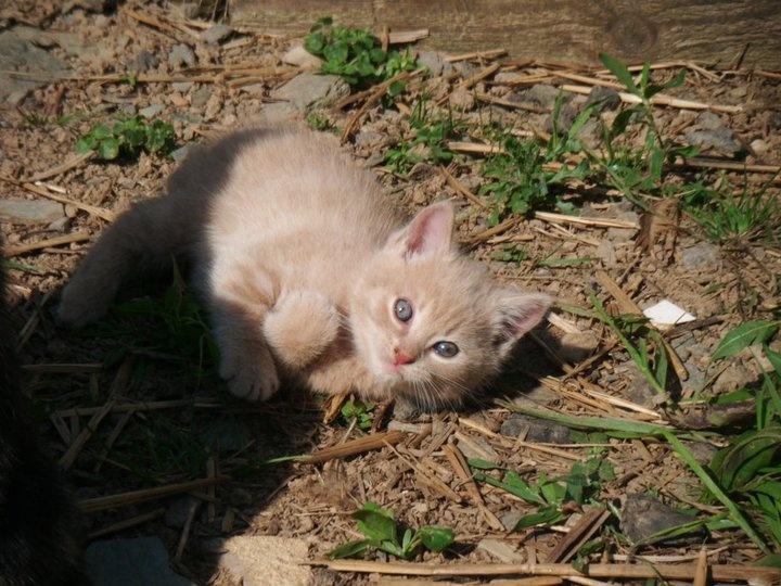 Baby kitten playing!
