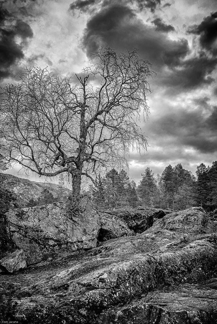 Tree growing on rocks by Tom Jarane on 500px