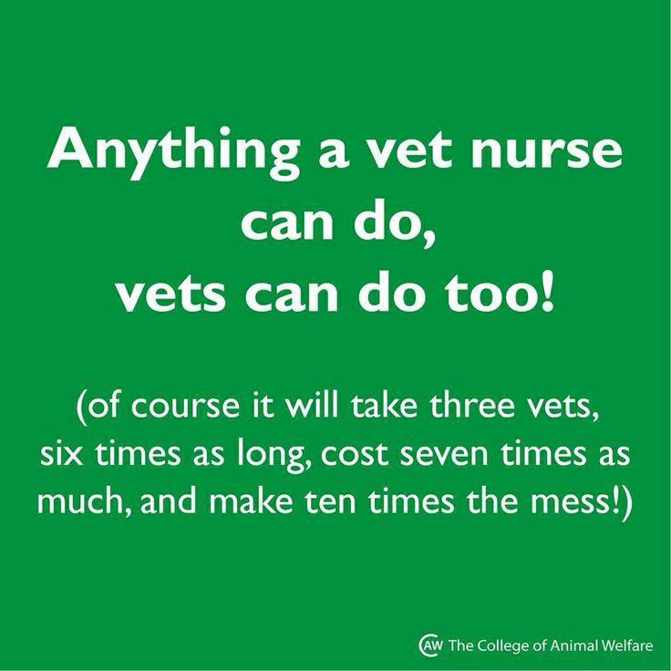 Best Vet Tech Images On   Ha Ha Veterinary Medicine
