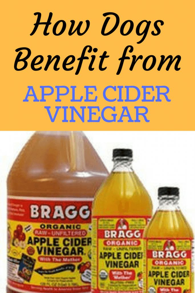 How to Treat Dog Fleas With Natural Products Apple