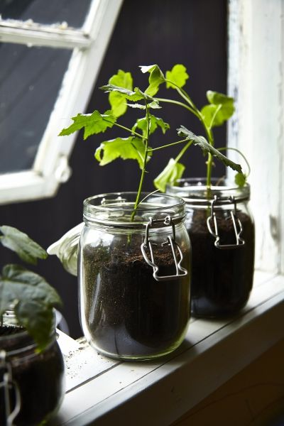 Quick tips for creative gardening. KORKEN glass jars easily double as plant pots for young herbs and seedlings, with their glass sides you can see if your growing greenery needs a little extra water too.