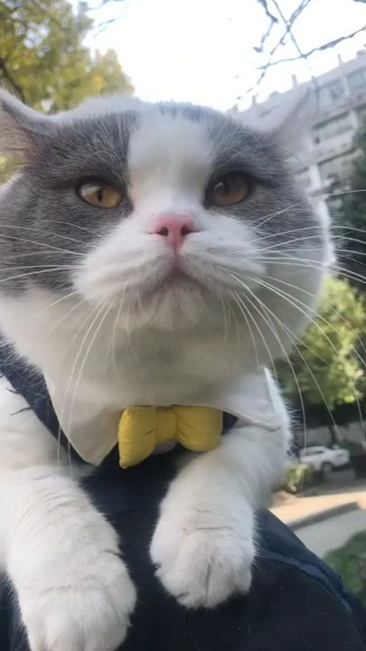 #Amazing Cat Voice #cats #catsbreeds #catsvideos #catshumor #catsfood