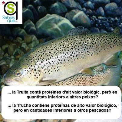 La #Trucha contiene #proteinas de alto valor biológico, pero en cantidades inferiores a otros pescados / La #truita conté #proteines d'alt valor biològic, però en quantitats inferiors a altres peixos
