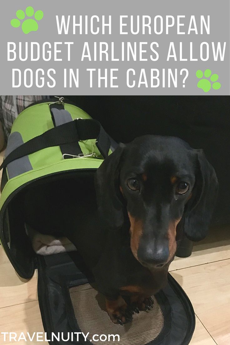 Best 25 dog travel ideas on pinterest dog travel for Airlines that allow dogs in cabin