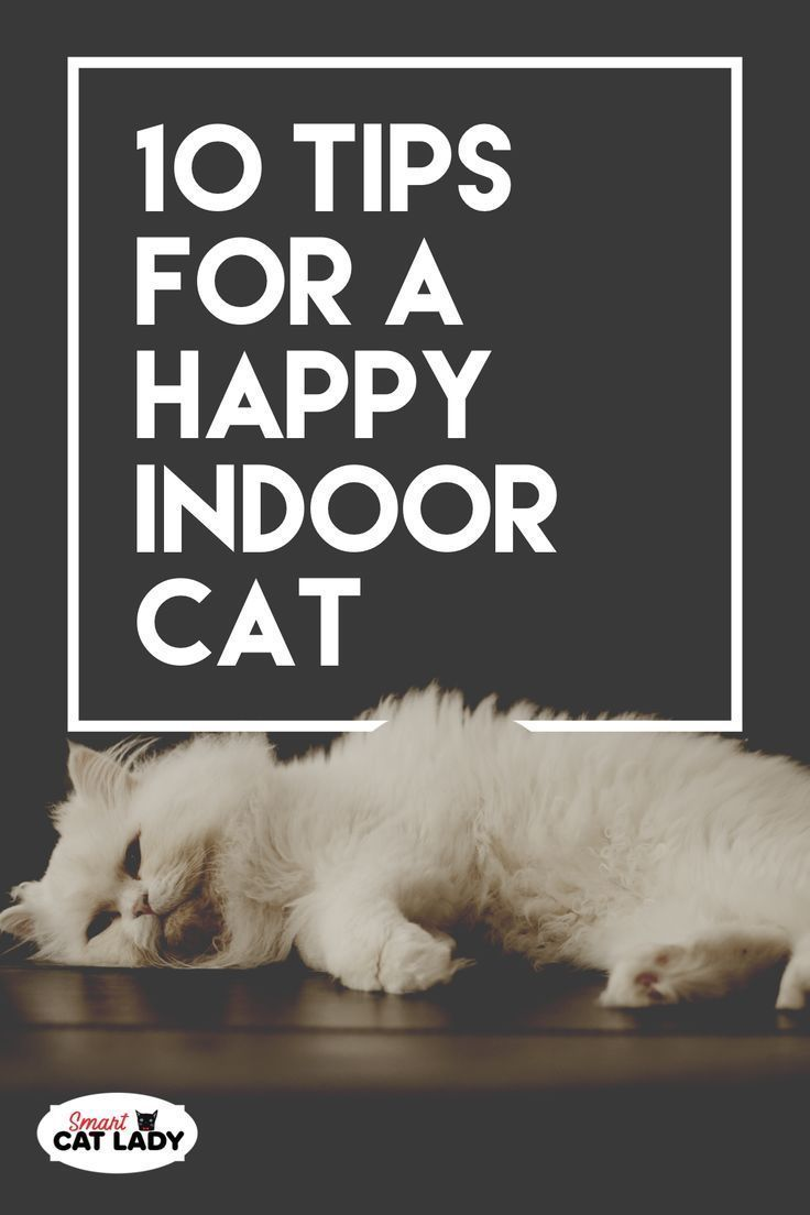 10 Tips For A Happy Indoor Cat If You Re A Cat Lover You Want Your Cat To Be Happy Even If Your Cat Can T Go Outside And Roam Indoor Cat