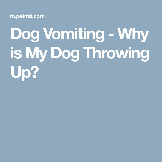 Dog Vomiting - Why is My Dog Throwing Up?