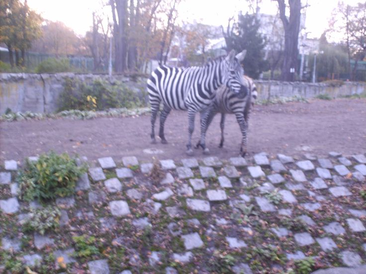 Wroclaw Zoo #zoo #animals #wroclaw #biggest