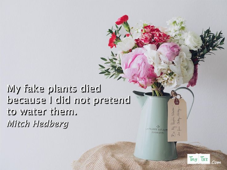 My fake plants died because I did not pretend to water them. - Mitch Hedberg #quotes #funny #quoteoftheday #tnytxt