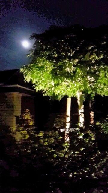 Zo mooi die maan.