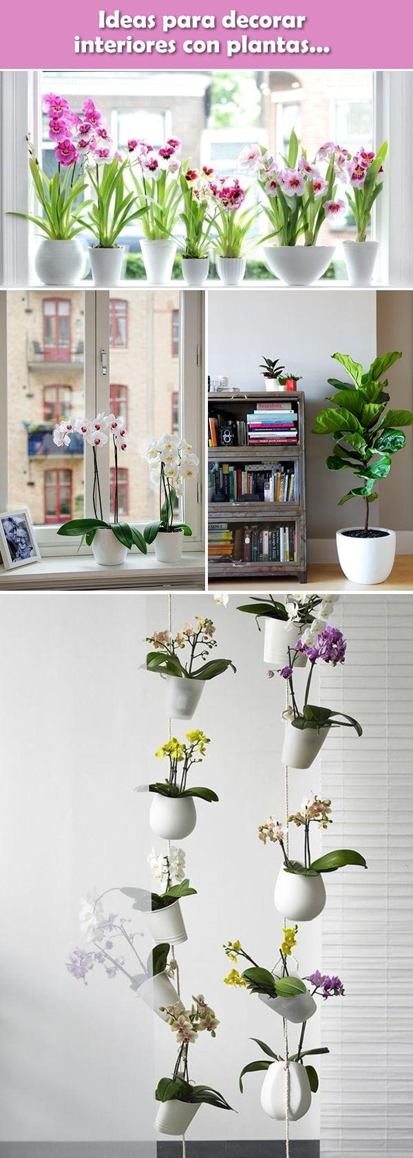 As 25 melhores ideias de plantas de interior no pinterest for Plantas para decorar