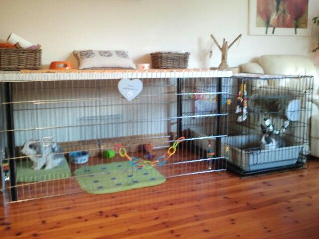 54 best images about dog crate to bunny cage on pinterest for Homemade bunny houses