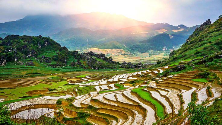 Rice field - Vietnam holiday