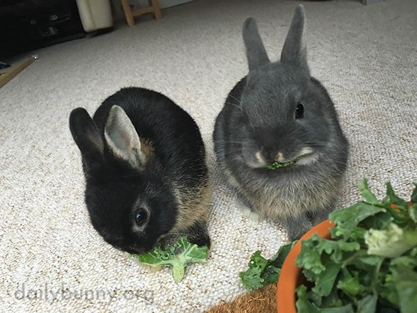 Bunnies Share a Tasty Bowl of Greens