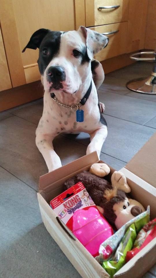 Zanto - DoggieBag.no #DoggieBag #Hund