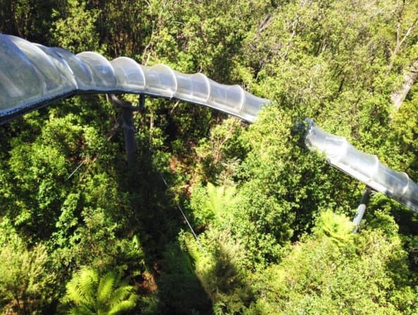 This is definitely the coolest way to start a bush walk, sliding 110 metres down to the floor of a natural sinkhole. From there you can walk along wooden walkways and explore the unique forest habitat.