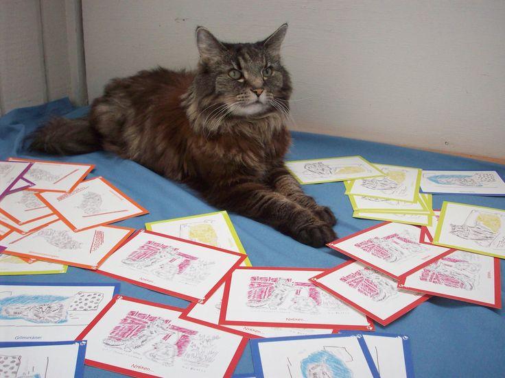 Simba håller lugnt koll på alla vackra och färgglada vykort. Just nu 10 kr för en 10-pack på www.katt4you.se