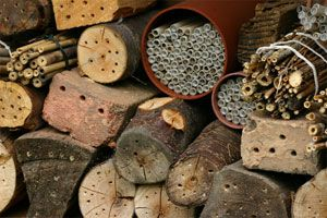 Mason Bee House ideas: Leafcutter Bees, Mason Bees, Stanište Za, Solitary Bees, Google Search, Za Solitarne, Solitarne Pčele, Bee Houses