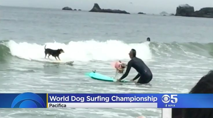 Salty Dogs Hang Ten In Gnarly Annual Surfing Championship