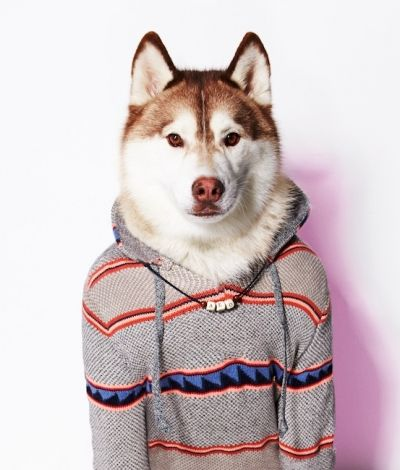 The American Beagle Outfitters Dog Line Is The Cutest Thing You've Ever Seen