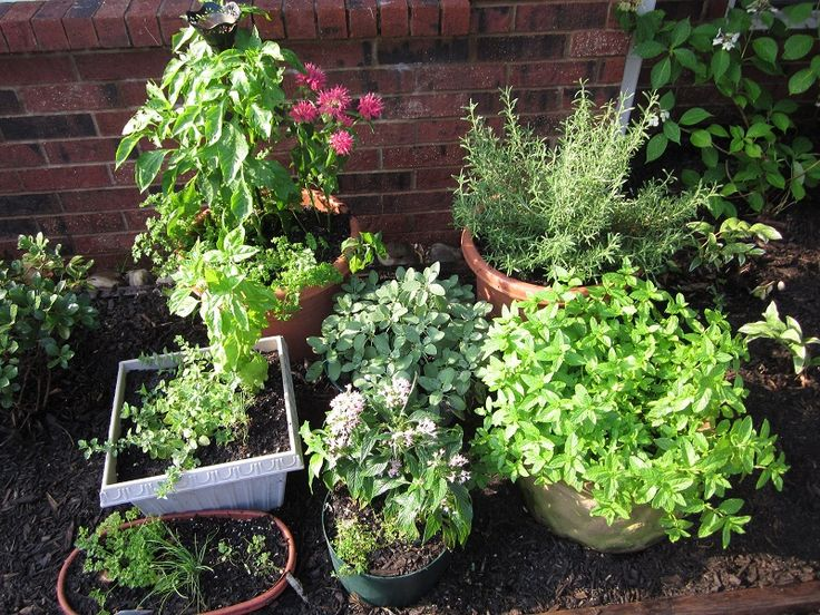 How to Plant an Outdoor Potted Herb Garden
