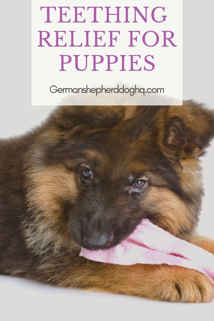 Teething Tips Teething Relief For Puppies Teething Relief Dog Teething Toys Puppy Teething