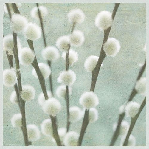 pussy willows.... must incorporate in decor... In tall vase in entry way? family/living room?