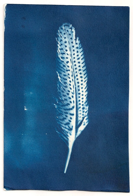 Spotted Feather - Cyanotype