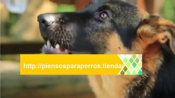Piensos Online Para Perros |  Los mejores Piensos para Perros Infórmate de la calidad de los Piensos para tus perros: http://piensosparaperros.tienda/