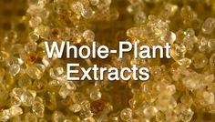 Whole-Plant Cannabis Concentrates Could Offer Broad Spectrum Benefits, Whole-Plant Cannabis Extracts On The Rise