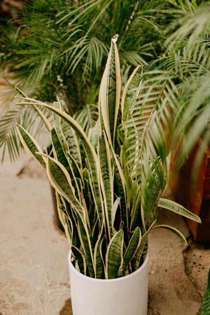 10 Houseplants That Need (Almost) Zero Sunlight Plants