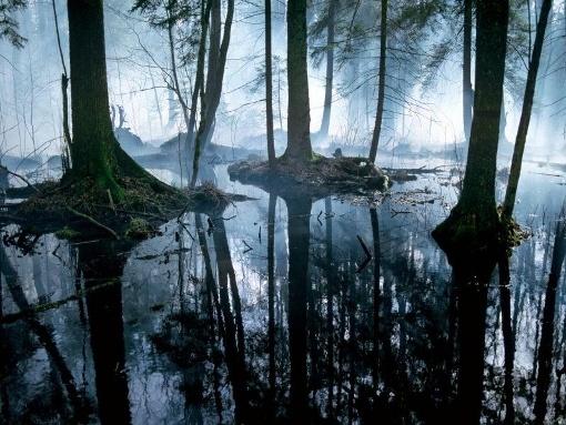 Bialowieza Primeval Forest, Poland